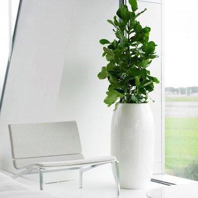 Golvväxter med litet ljusbehov