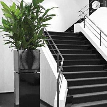 Golvväxter med medelstort ljusbehov